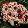 Кровавый зуб — самое ядовитое растение на Земле