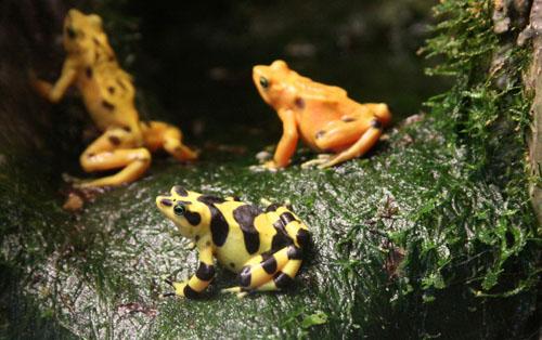 Самые опасные животные планеты | Невероятный мир