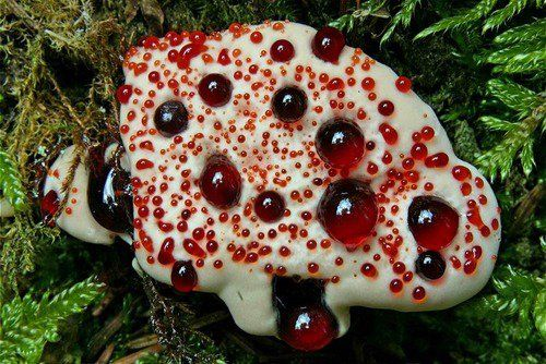 кровавый зуб фото