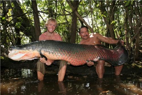 Самая крупная рыба в мире