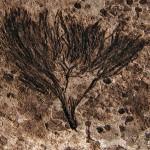Самые древние растения на земле