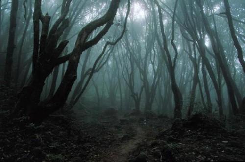 55024127_dark_forest