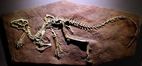 Гетеродонтозавр. Самый обаятельный динозавр