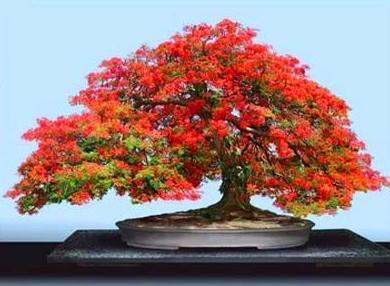 Самые маленькие деревья