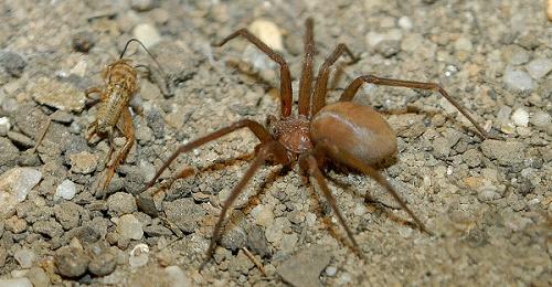 Самые опасные пауки в мире