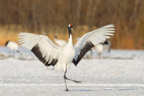 Самые редкие птицы в мире