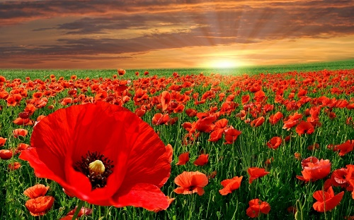 Самые красивые цветы в мире Интересные факты 74
