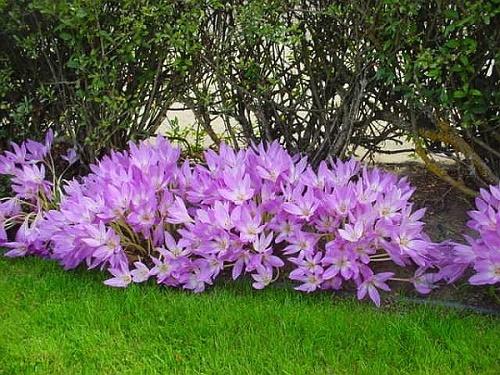 Самые смертельно опасные цветы мира