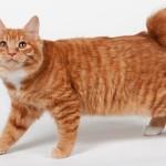 Самая редкая кошка