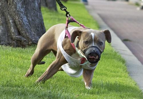 Самая опасная порода собак