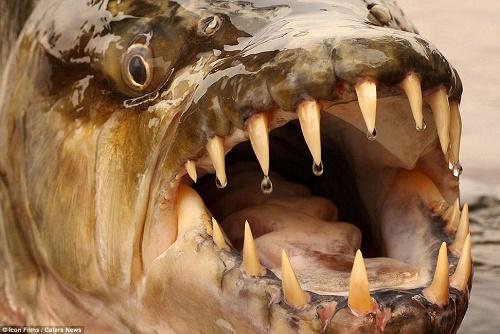 Самая опасная рыба в мире