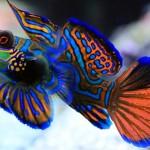 Самая красивая рыба в мире