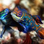 Самая красивая рыба в мире II