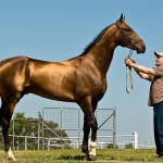Самая красивая лошадь II