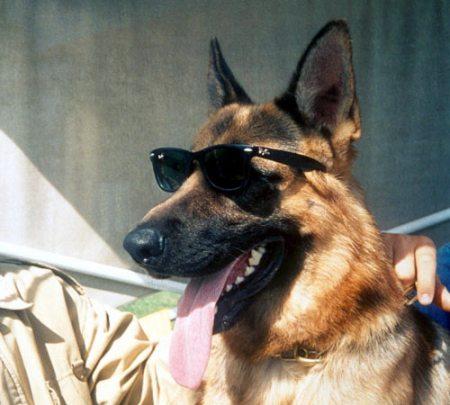 Самая богатая собака в мире