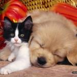 Самые смешные кошки и коты