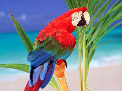 Самая пестрая птица