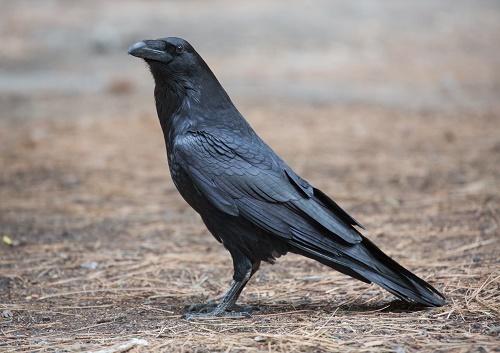 Самая долгоживущая птица