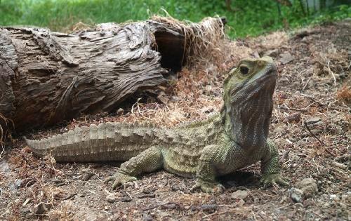 самые древние рептилии