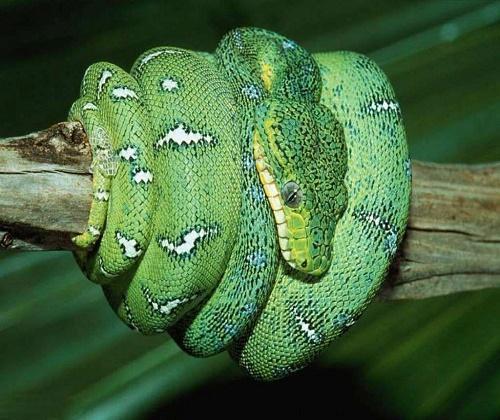 Самые самые рептилии